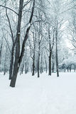 Forest. Trees nature snow wood backgrounds Stock Photos