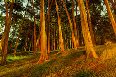 Forest of trees at night with shadows Royalty Free Stock Image
