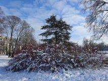 Forest Trees och vintersnölandskap Royaltyfria Foton