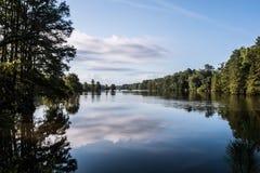 Forest Trees på den knubbiga sjön arkivbilder