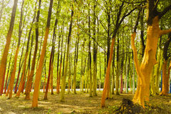 A forest with trees painted in different colors Royalty Free Stock Images