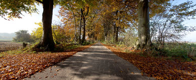 Forest trees panorama autumn leaves Royalty Free Stock Images