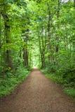 Forest Trees Park Footpath Springtime fotografie stock libere da diritti