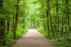 Forest Trees Park Footpath Springtime immagine stock