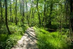 Forest Trees Park Footpath Springtime immagine stock libera da diritti