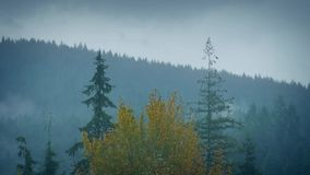 Forest Trees In Passing Mist And Rain. Timelapse of misty mountainside moving over trees stock footage