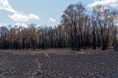 Forest Of Trees quemado Foto de archivo