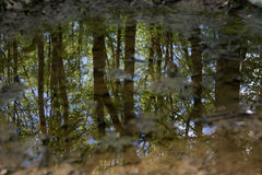 Forest trees reflected in water. Beautiful view of forest trees, as seen reflected in water royalty free stock image