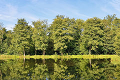 Forest trees reflecting in river water Stock Photo