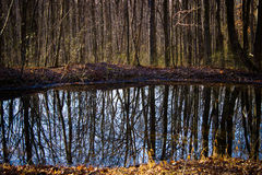 Forest trees with reflective pond in the fall Stock Photography
