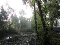 Forest trees beside the river. When river water falling down & we can saw some water soil Stock Photography