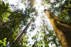 Forest Trees Roots tropical Photos libres de droits