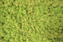Forest Trees Seen From Above Texture. Forest-like lichens texture background wallpaper in. Forest seen from above Stock Image