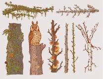 Forest Trees Set tiré par la main Photographie stock