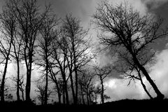 Forest trees silhouette stock photo