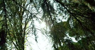 Forest trees silhouette and green spring summer leaves at. Daylight sky with sun flare rays flying through forest on nature background, concept of nature stock video
