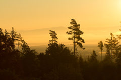 Forest trees silhouette in orange sunrise Royalty Free Stock Photos