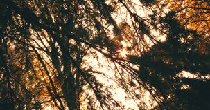 Forest trees silhouette at sky sunset with sun flare rays flying through forest on nature background, concept of stock video footage