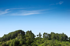 Forest trees and sky. Variety of forest trees on clear sky stock images