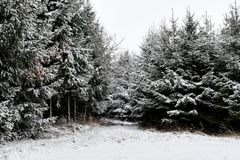 Forest and trees with snow in winter and blanket of clouds stock photo