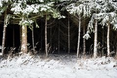 Forest and trees with snow in winter and blanket of clouds royalty free stock images