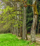 Forest and trees in summer time Royalty Free Stock Images