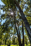 Forest trees. sun rays filter through branches. Autumn stock photography