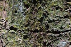 Forest Trees Texture tropicale Fotografia Stock Libera da Diritti