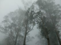 Cloud and Trees. Forest trees trapped in misty clouds stock image