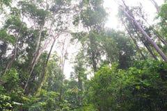 Forest Trees tropical Photographie stock libre de droits