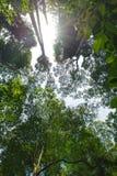 Forest Trees tropical Photos libres de droits
