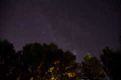 Forest trees under Milky Way in night sky royalty free stock photos