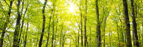 Autumn forest with sun beam. Stock Image