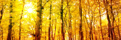Autumn forest with sun beam. Royalty Free Stock Photos