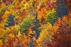 Forest and trees with various autumn colors leaves stock images