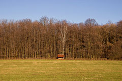 Forest Trees with Wooden Cottage Stock Image