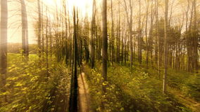 Forest trees woods background. Aerial view of forest trees. sun beaming light effect stock video footage