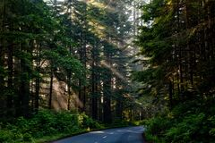 Forest, Trees, Woods, Sunlight Royalty Free Stock Photos