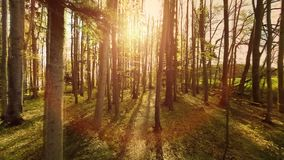 Forest trees woods trees plants nature background summertime aerial view stock video footage