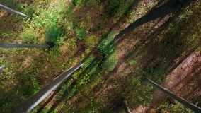 Forest trees woods trees plants nature background summertime aerial view stock footage