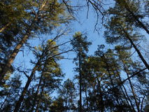 Forest Treetop Sky View Stock Photo