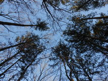 Forest Treetop Sky View Royalty Free Stock Photography
