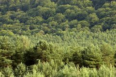 Forest treetops on the hill side Stock Photo