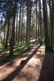 Forest in Trentino Alto Adige. Coniferous forest in Trentino Alto Adige stock photography