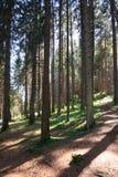 Forest in Trentino Alto Adige. Coniferous forest in Trentino Alto Adige stock photo