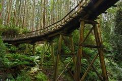 Forest trestle bridge. March 16 2014. Rubicon state forest. Rubicon Victoria Australia. Beech creek trestle bridge historic restoration. This bridge was once Royalty Free Stock Images