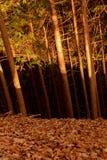 Forest Tricolor Nikko Japan royaltyfri bild