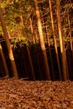 Forest Tricolor, Nikko Japan royalty free stock image