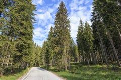 Forest of Triglav national park inside Bohinj valley near Bled in Julian Alps, Slovenia, Europe. Stock Image