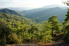 In the Troodos mountain Royalty Free Stock Photos
